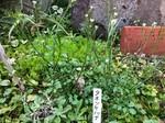2021.3.27園芸活動_210327_40.jpg