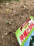 20210507  園芸活動日_210513_14.jpg