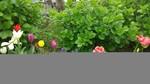 2021年4月6日活動写真_210406_5.jpg