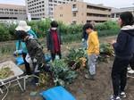 3/30  ニンジン収穫(上田さんの畑にて)_200401_0001.jpg