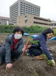 3/30  ニンジン収穫(上田さんの畑にて)_200401_0020.jpg